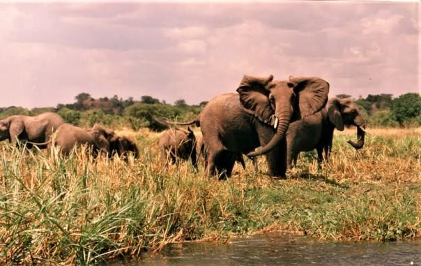 bhromonmarchinsonelephantsguardedbymonsters
